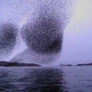 "Women On Canoe Trip Catch Video Of Spontaneous, Awe-Inspiring ""Murmuration"""