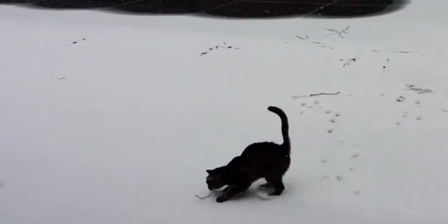 This Southern Cat Sees Snow For The First Time And Her Reaction Is Just Adorable