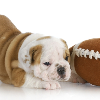 The Non-Fan's Guide To The NFL Playoffs, Part 4: Pro (And Puppy!) Bowl Weekend
