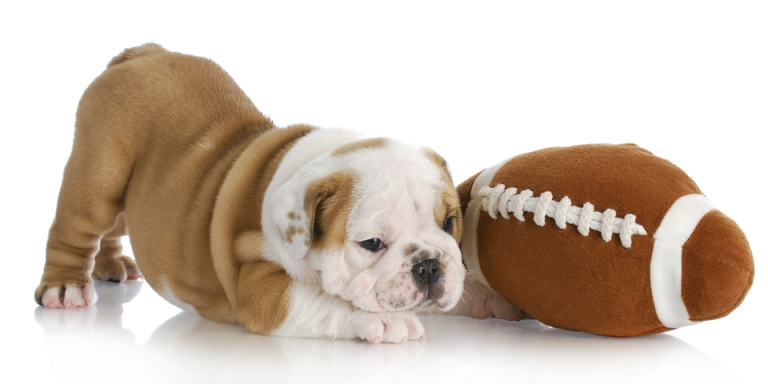 The Non-Fan's Guide To The NFL Playoffs, Part 4: Pro (And Puppy!) BowlWeekend