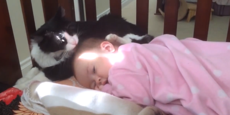 If You've Ever Wondered If A Cat Will Lick A Baby's Head, This IsIt