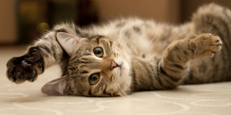 13 Signs Your Cat Runs Your House