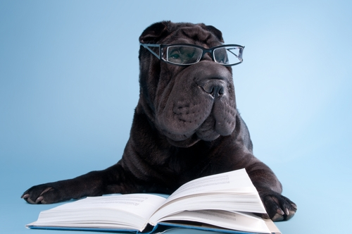 9 Things Dogs Teach You AboutCollege