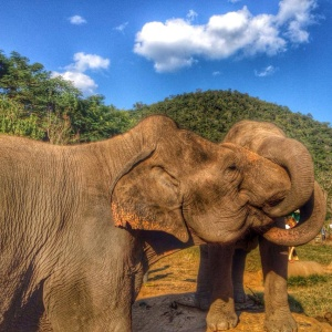 8 Things Working With Elephants Has Taught Me About Life