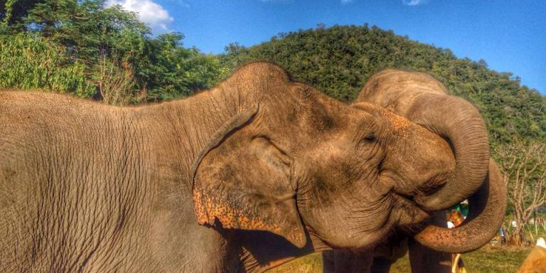 8 Things Working With Elephants Has Taught Me AboutLife