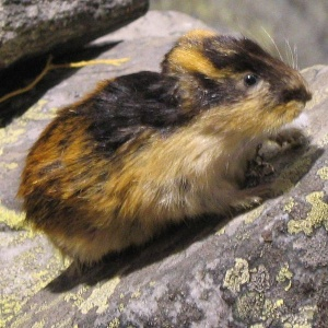 Don't Be A Lemming. Find Your Own Path.