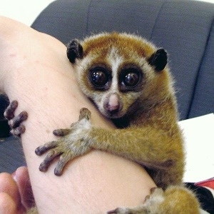 9 Cute Animals That You Didn't Know Can Poison The Hell Out Of You
