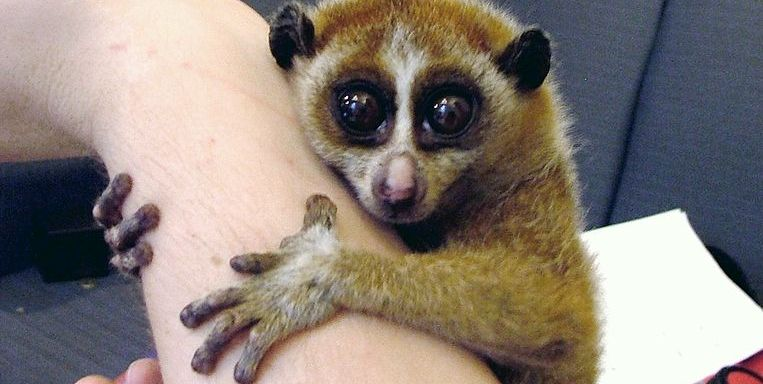 9 Cute Animals That You Didn't Know Can Poison The Hell Out OfYou