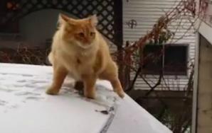 #CatsFAIL