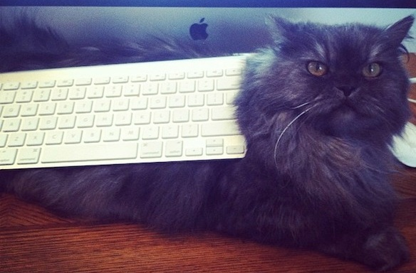 17 Struggles Only Cats Know