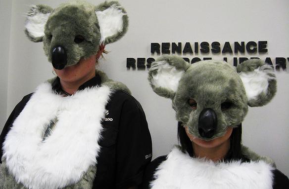 10 Reasons Koalas Are Better At Life ThanHumans