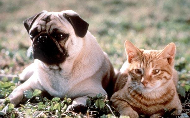 The Adventures Of Milo And Otis [HD]