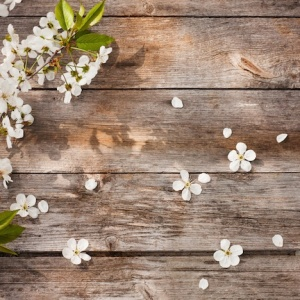 10 Reasons Why Spring Is Just The Best