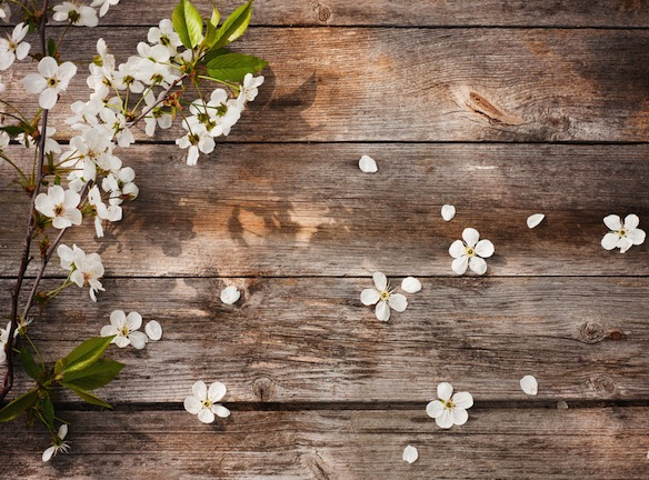 10 Reasons Why Spring Is Just TheBest