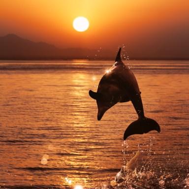 Why I'd Fuck A Dolphin