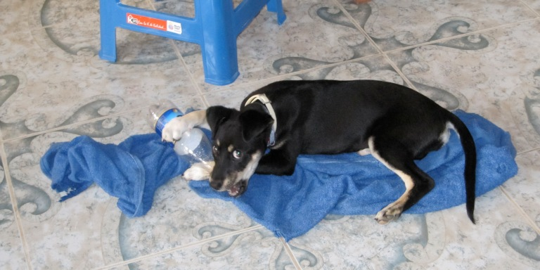 We Adopted A Dog In Ecuador, But It Turned Out To Be One Of The Saddest Days Of OurLives
