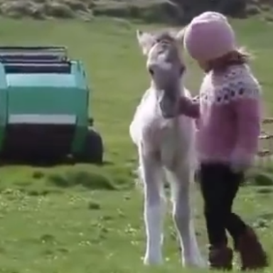 Melt Your Heart With This Video Of A Rescued Foal Playing With A Little Girl