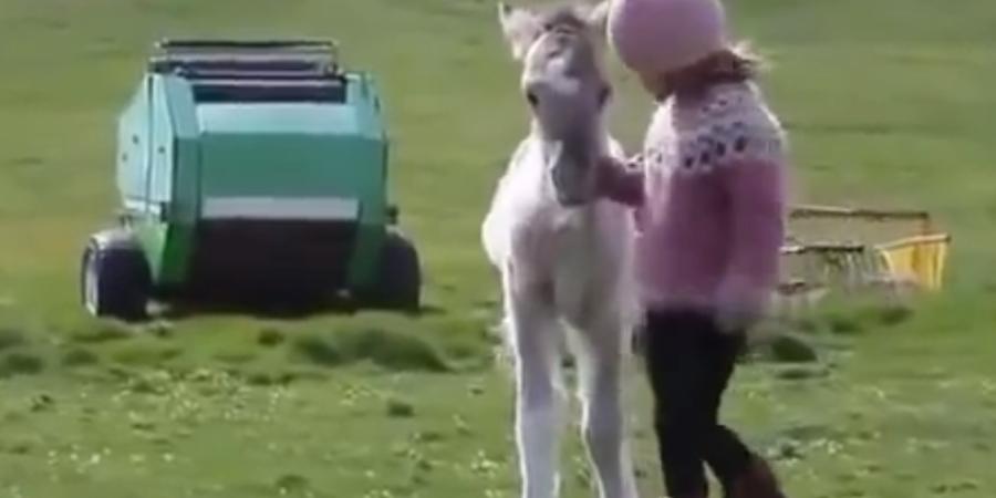 Melt Your Heart With This Video Of A Rescued Foal Playing With A LittleGirl
