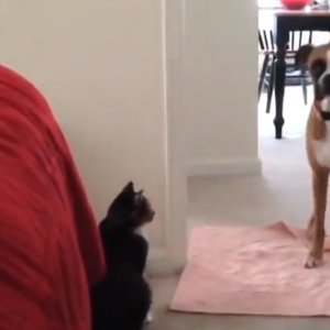 Cats (Being Cats) Won't Let These Pleading Dogs Pass Them