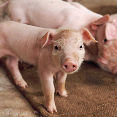 13 Reasons To Give Veganism A Chance