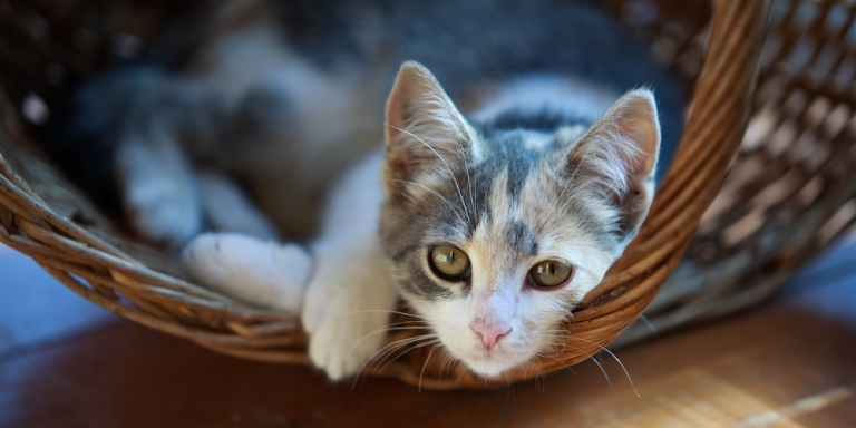5 Things You Never Realized About OwningCats