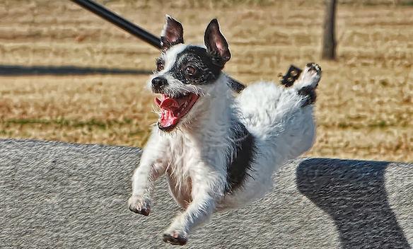 Emery Way / Flickr.com