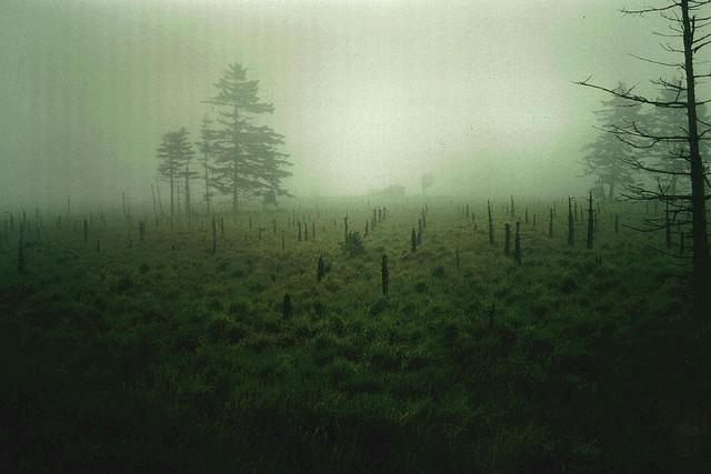 image - Flickr / josef.stuefer