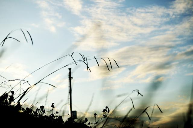 image - Flickr / ajari