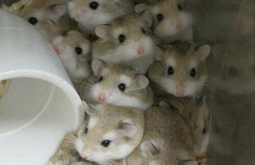 20 Pictures Of Adorable Tiny Little Hamsters You Just Can't Ignore