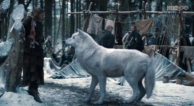 ghost-dire-wolf-game-of-thrones2