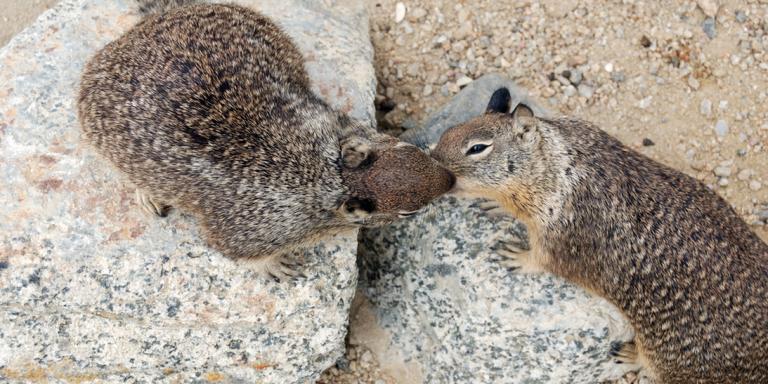 Live-Action Squirrel Erotica