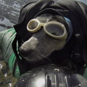 This Is The First Dog Ever To BASE Jump And It's Freaking Amazing