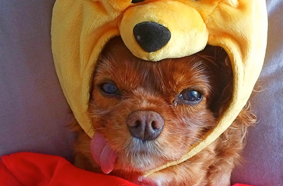 7 Invaluable Lessons We Can All Learn From OurDogs