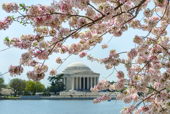 40 Things People From DC Will NeverSay