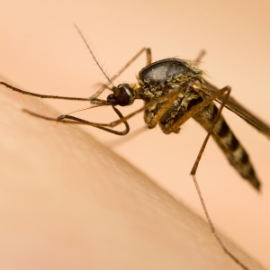 16 Things You Didn't Know About Mosquitoes