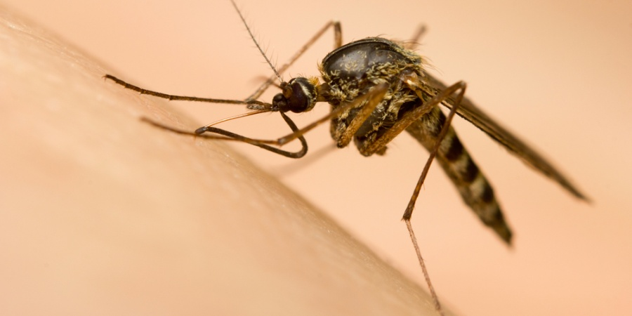 16 Things You Didn't Know AboutMosquitoes