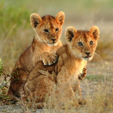 Why Wildlife Tourism Does More Harm Than You Know
