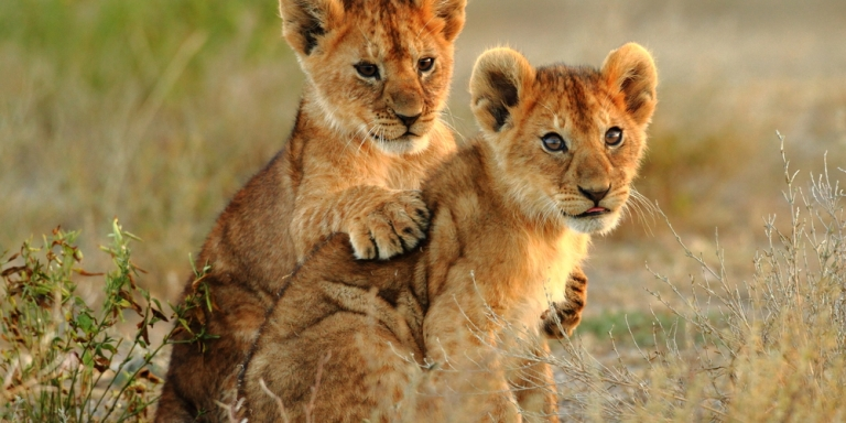 Why Wildlife Tourism Does More Harm Than YouKnow