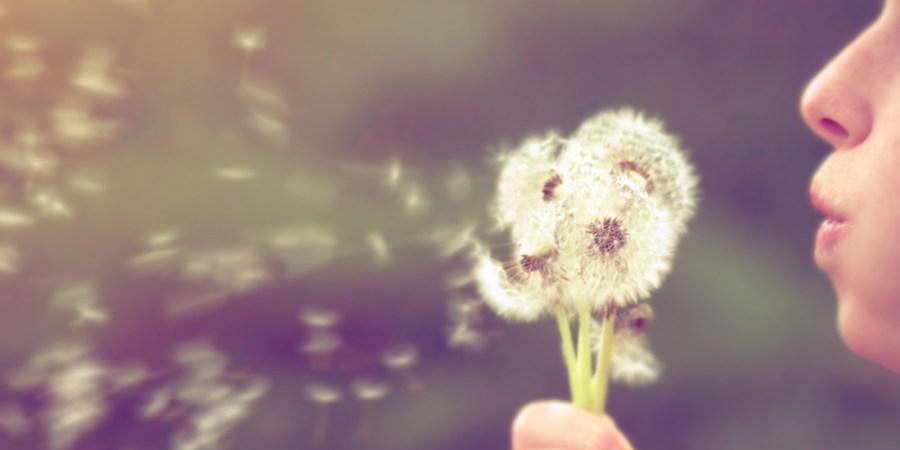 9 Haikus For PollenAllergies