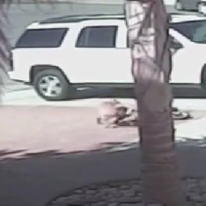 Guardian Angel Cat Saves Little Boy From A Dog's Vicious Attack