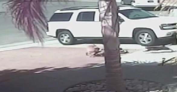 Guardian Angel Cat Saves Little Boy From A Dog's ViciousAttack