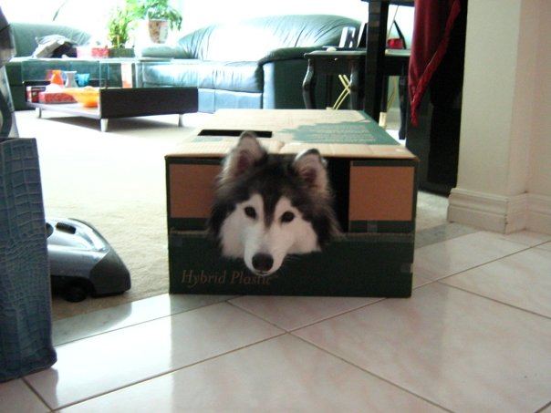 She ended up staying in there for awhile until we went to do something else, at which point she promptly followed to stay in on the action. Credit: DONG_OF_JUSTICE /  Imgur