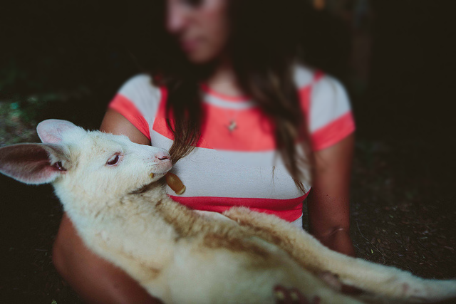 This Hipster Couple Owns A Baby Kangaroo Because WhyNot?