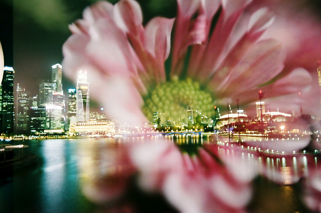 image - Flickr / Khánh Hmoong