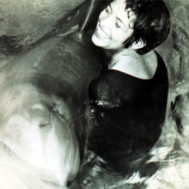 The Dolphin Who Killed Himself Over A Broken Heart