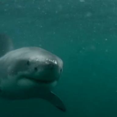 Watch This Heart-Pounding GoPro Video Of A Man Fighting Off A Great White Shark In Australia