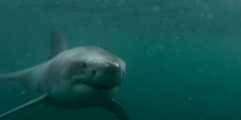 Watch This Heart-Pounding GoPro Video Of A Man Fighting Off A Great White Shark InAustralia