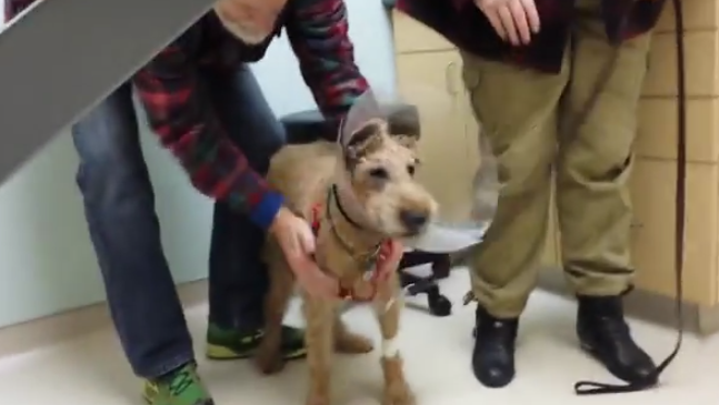 This Diabetic Dog Lost His Eyesight. But Surgery Saved His Eyes And His Reaction When He Sees His Family Is Incredible.