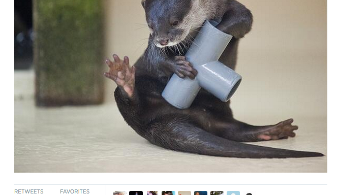 21 Adorable Photos Of Otters To Make Your Day InstantlyBetter