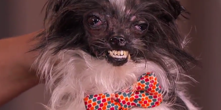 Peanut, The Ugliest Dog In The World Got A Makeover On Jimmy Kimmel, And It Still LooksUgly